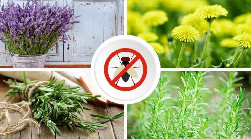 repelente natural de moscas, 6 hierbas y plantas aromáticas que actúan como repelente natural de moscas