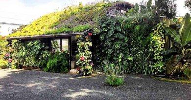 techo verde con cisterna