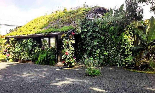 El techo verde con cisterna ofrece la posibilidad de reutilizar el agua de lluvia