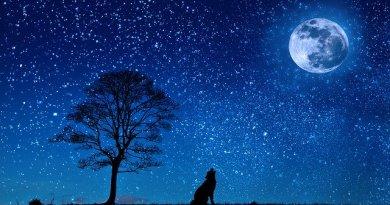 , El Libro de la Luna (libro gratuito) para saber los mejores momentos de siembra y cosecha.
