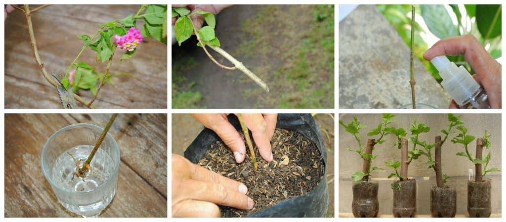 Cómo reproducir plantas mediante esquejes, Paso a paso con fotos