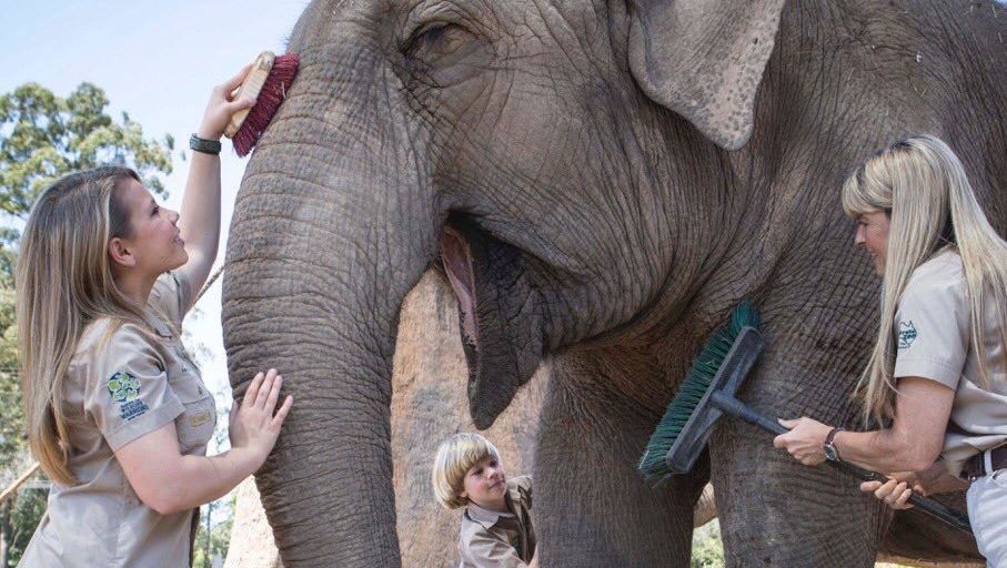 La familia Irwin abre el Santuario de Elefantes, cumpliendo uno de los objetivos de vida de Steve