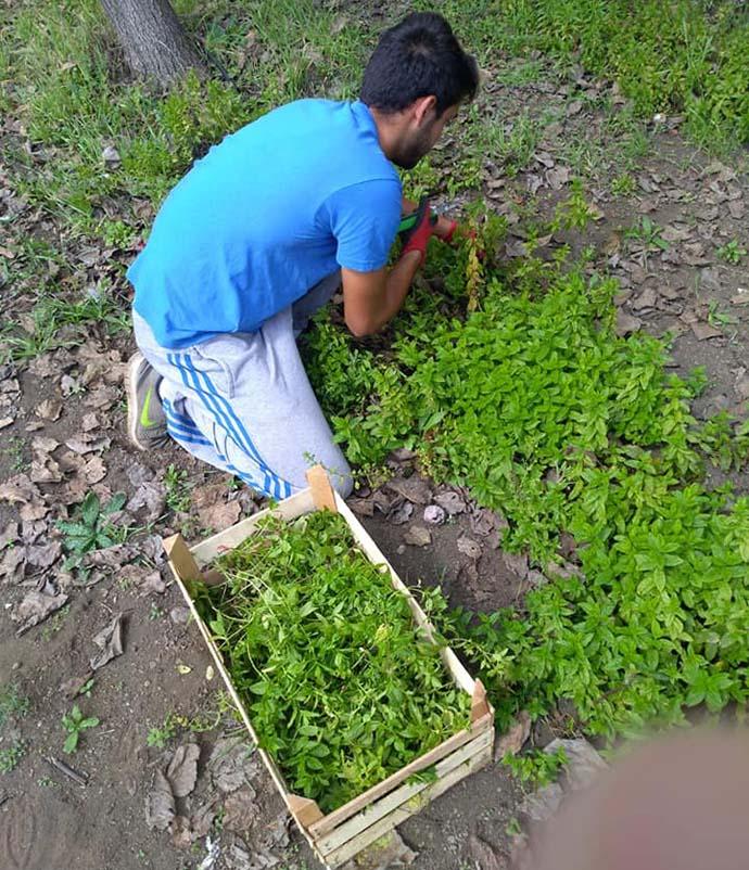 Se gradúa y pide un pedazo de tierra como regalo: 'las especias y las plantas aromáticas son mi futuro'