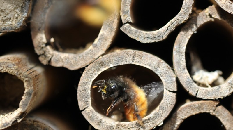 Una caja de leche puede convertirse en un hotel para abejas y polinizadores