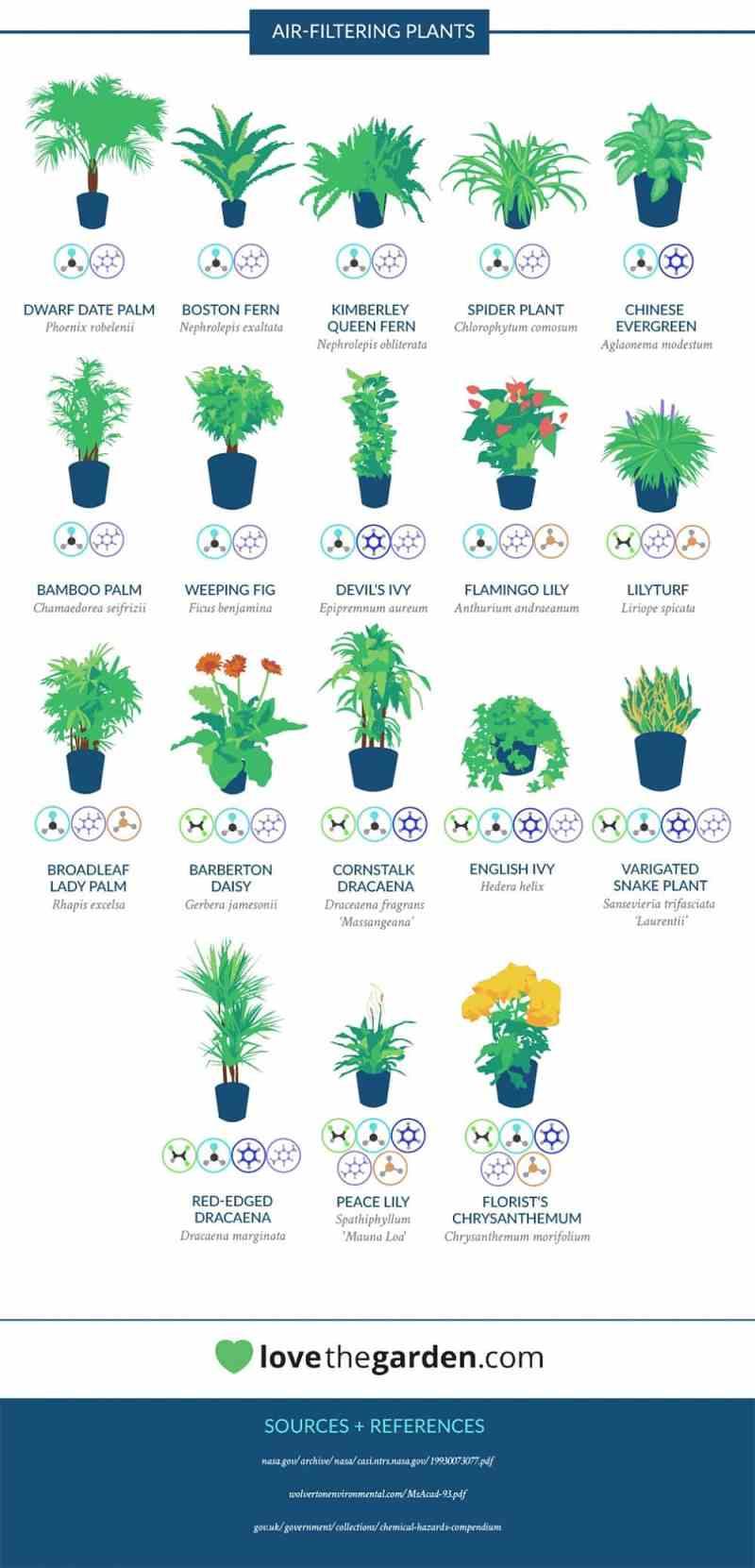 plantas purifican aire
