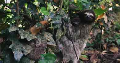 , Costa Rica anunció que se convertirá en el primer país del mundo en cerrar sus zoológicos y liberar a todos los animales cautivos