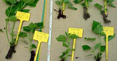 Lista de plantas que se reproducen por esquejes