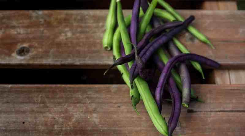 Todo acerca del Cultivo de la Arveja o Guisante