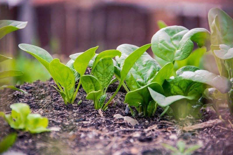 20 Cultivos que toleran la sombra