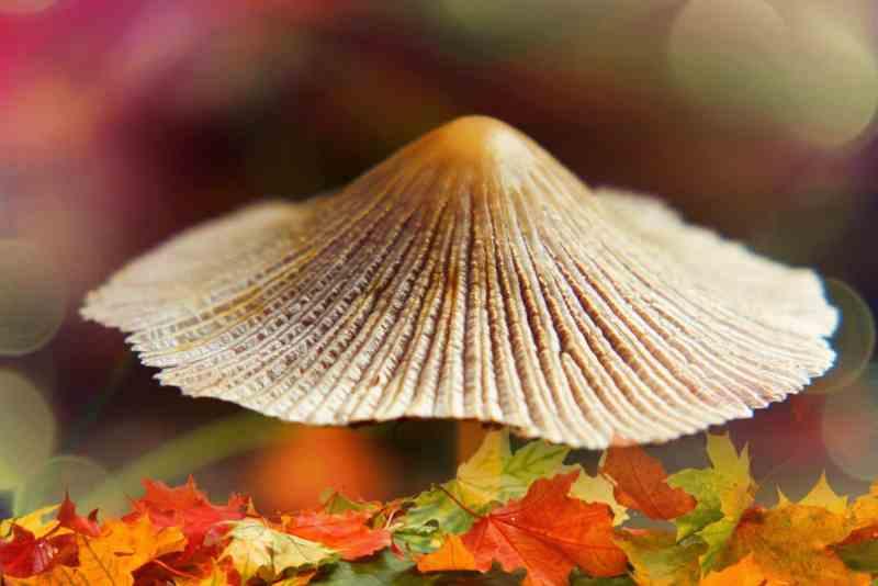 , Los hongos pueden limpiar los derrames de petróleo y absorber los desechos tóxicos del suelo