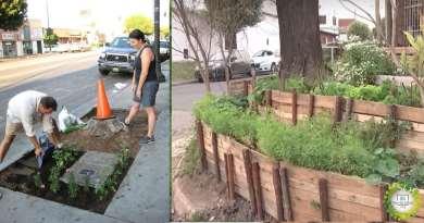 , Vecina cultiva alimentos en su vereda y promueve la huerta callejera