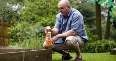 , Cómo usar el bicarbonato de sodio para prevenir hongos en las plantas