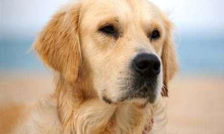 Ser propietario de un perro está vinculado a la reducción de riesgo cardiaco