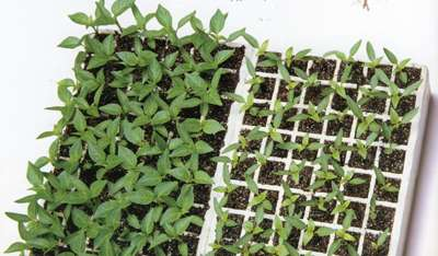 Cómo cosechar su propia comida en espacios pequeños