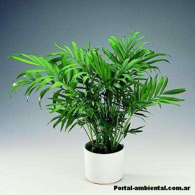 plantas de interior que purifican el aire