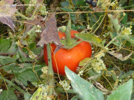 Tomate FOTO CHERRY SALVAJE