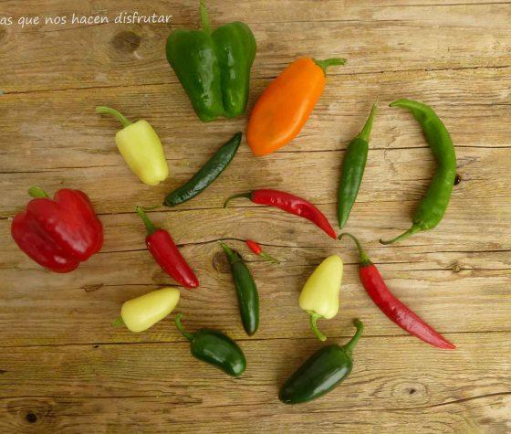 #pimientos #variedad #sabor #elhuertodetialou #chiles