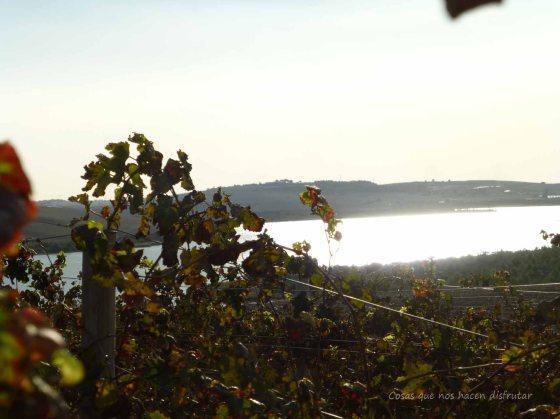 #PeterMaurer #vino #ecologico  (16)