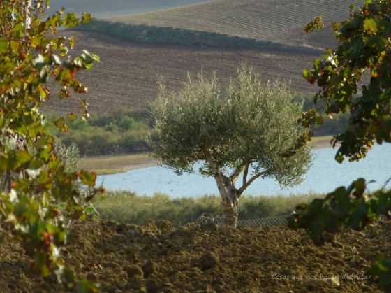 #PeterMaurer #vino #ecologico  (19)