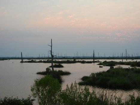 Louisiana Marsh. Credit: ELI