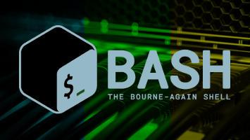 bash network script