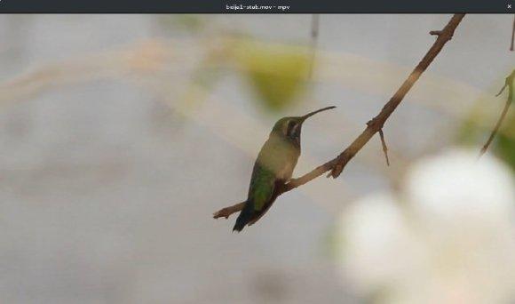 Imagem de vídeo com estabilização cropada