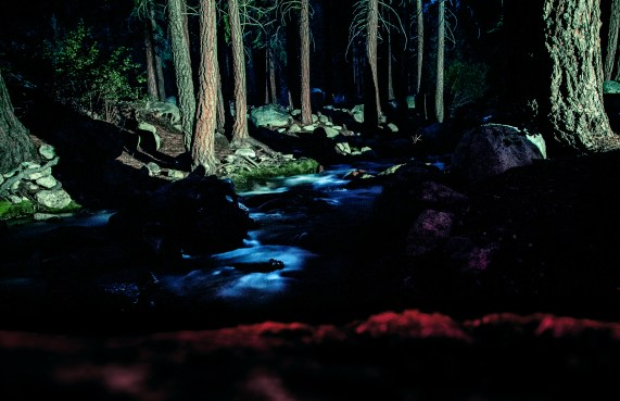 Woods at night