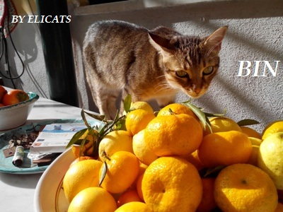 Grapefruit seed extract (GSE) for cats and dogs