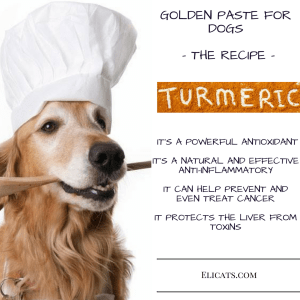 Turmeric dogs dose Golden Paste