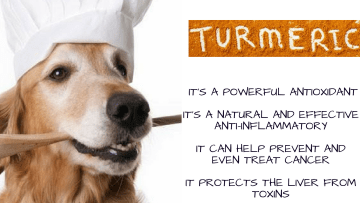Turmeric for dogs dose