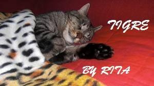 policitemia vera nel gatto