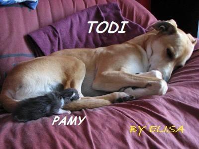 Vaccinazioni nel gatto e nel cane Troppe malattie