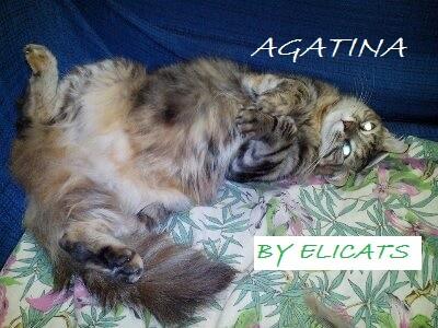 Diabete nel gatto diagnosi trattamenti alimentazione