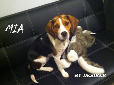 Infiammazione intestinale nel cane IBD