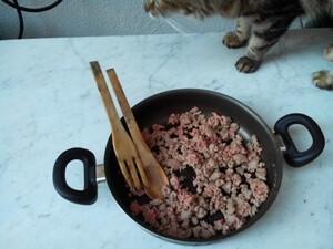 Nutrizione nel gatto cibo secco e cibo fatto in casa