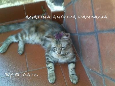 Fucsina Fenica tigna nel gatto