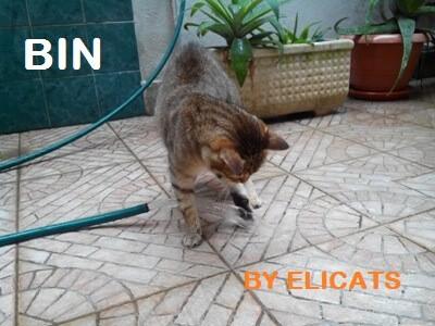 Fluidoterapia Ipodermoclisi cani gatti IRC