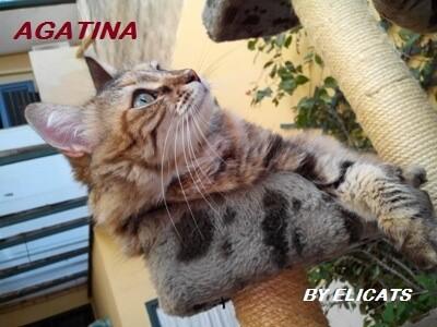 Zinco Selenio gatto cane