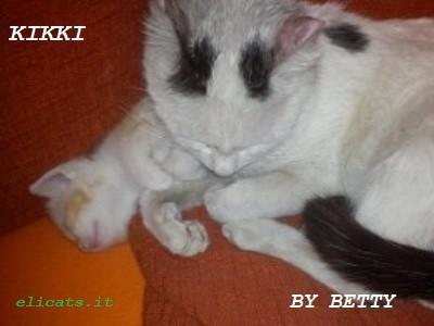Tumore pelle cane gatto