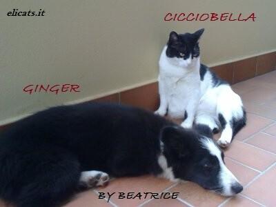 cortisone per cane gatto