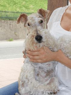 fig 3 fig 3 agopuntura veterinaria caso clino muffy