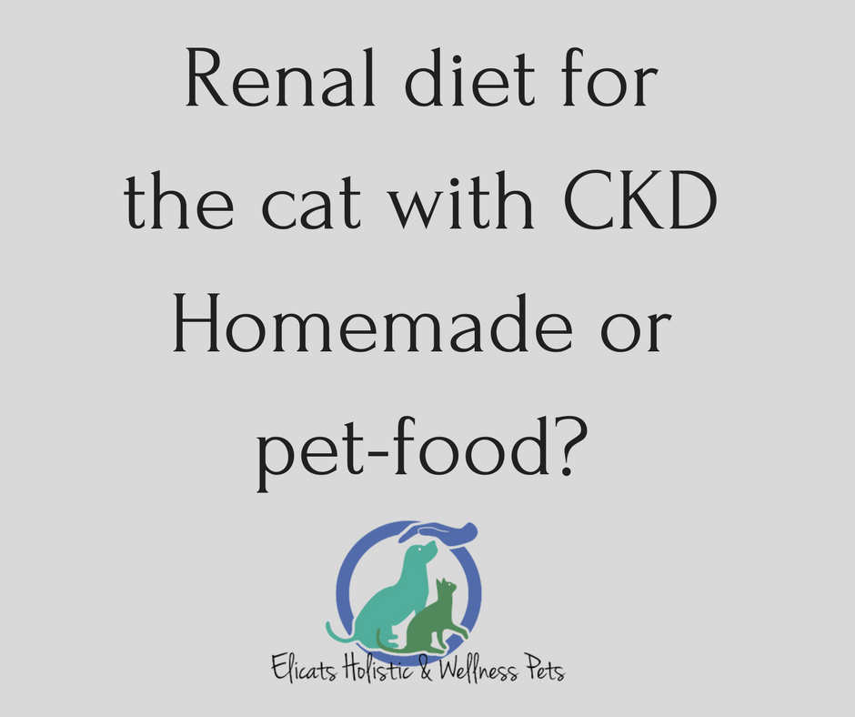 Renal diet for the cat Homemade or pet-food?