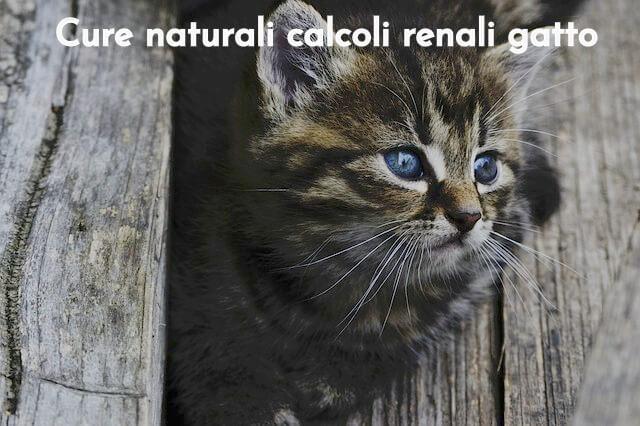 Cure naturali calcoli renali gatto