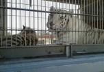 animales-en-circos4