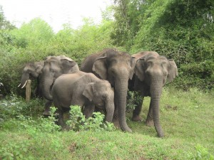 Elephants in jungle