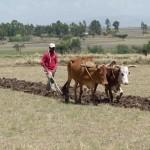 Ploughing Field