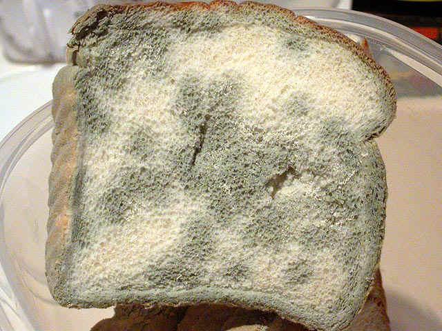 Mold_Bread