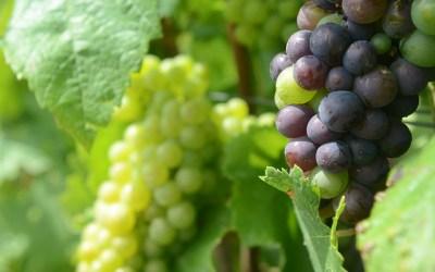 "Elijah Medge on the ""Sour Grapes"" Career Mistake"