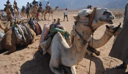 Egypt_camel ride