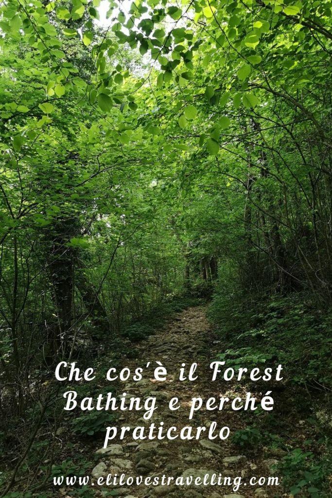 Che cos'è il Forest Bathing e perché praticarlo 1